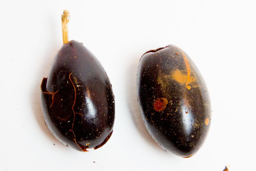 Chile catarina, típico de méxico